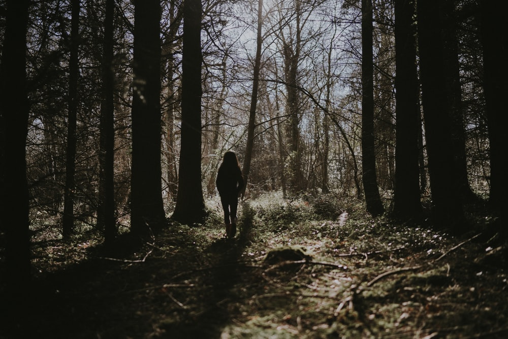 silhouette photo of person standing on forest