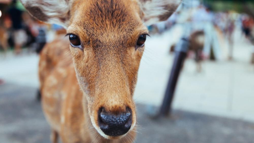 close up photo of deer face
