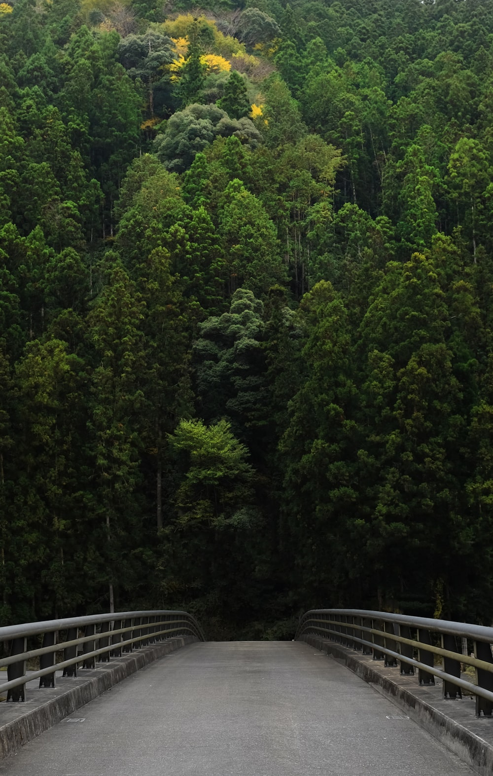 bridge in front of thick forest trees
