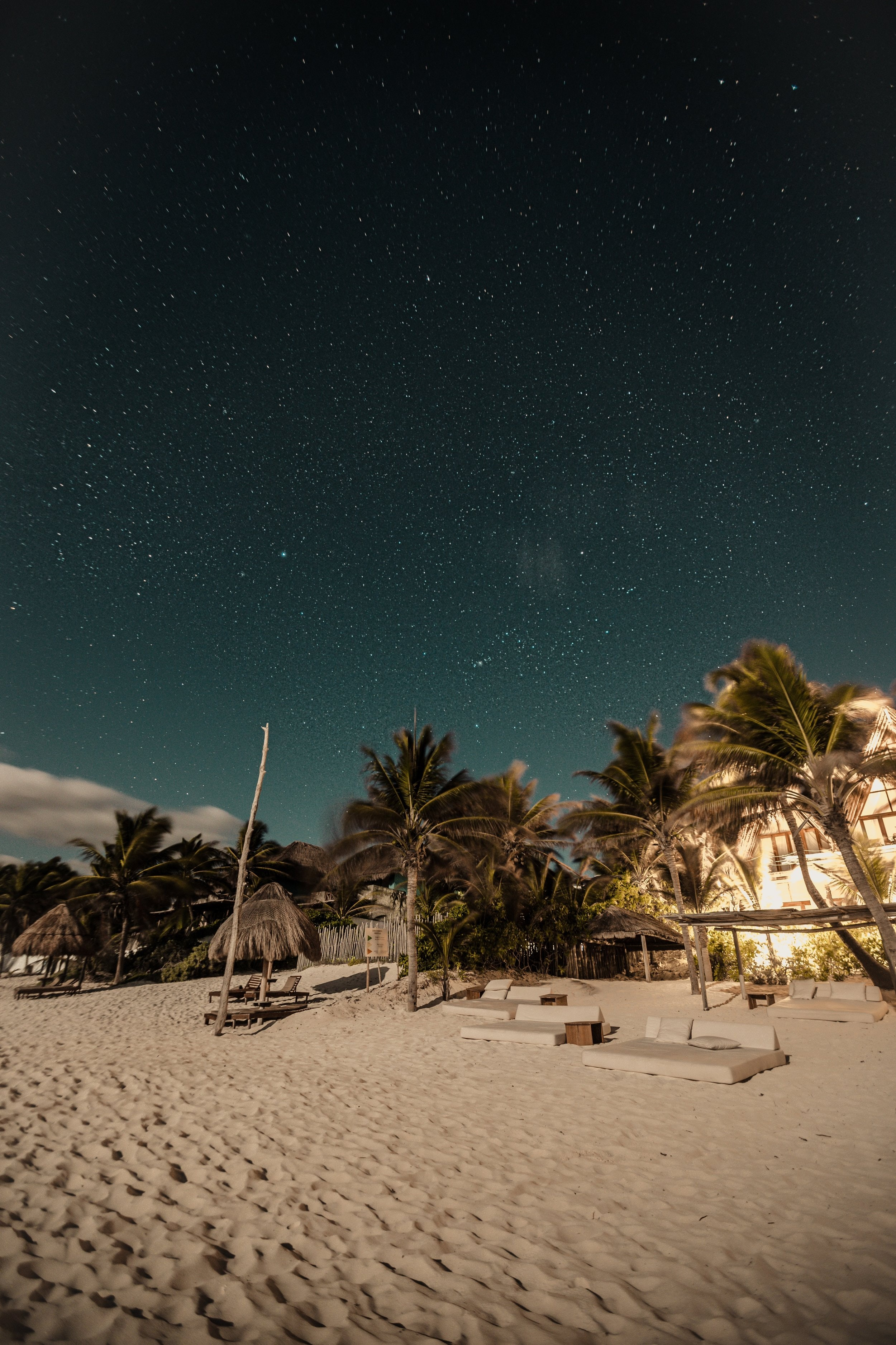 seashore and palm trees under starry sky