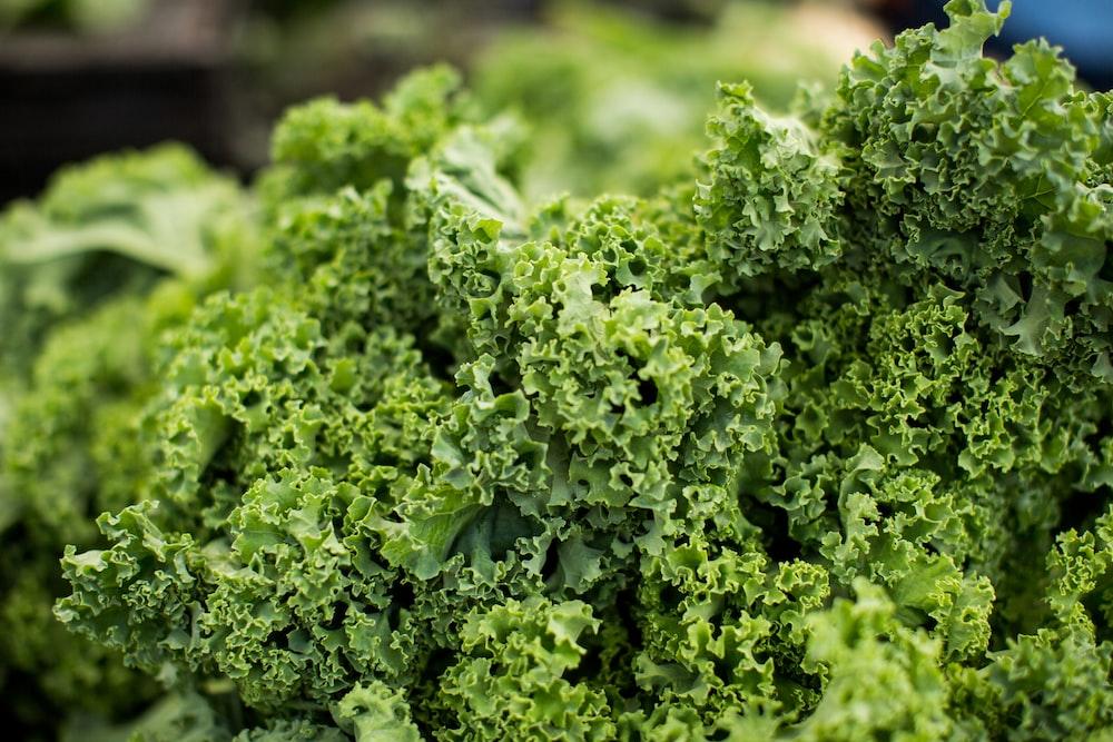 macro shot photography of lettuce