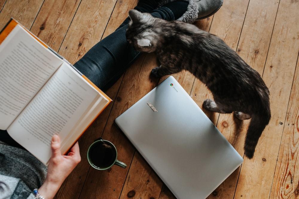 cat walking through laptop computer near woman reading book white lying on floor
