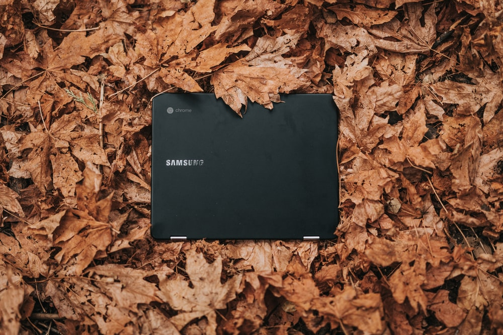 black Samsung Chromebook surrounded by dry leaves