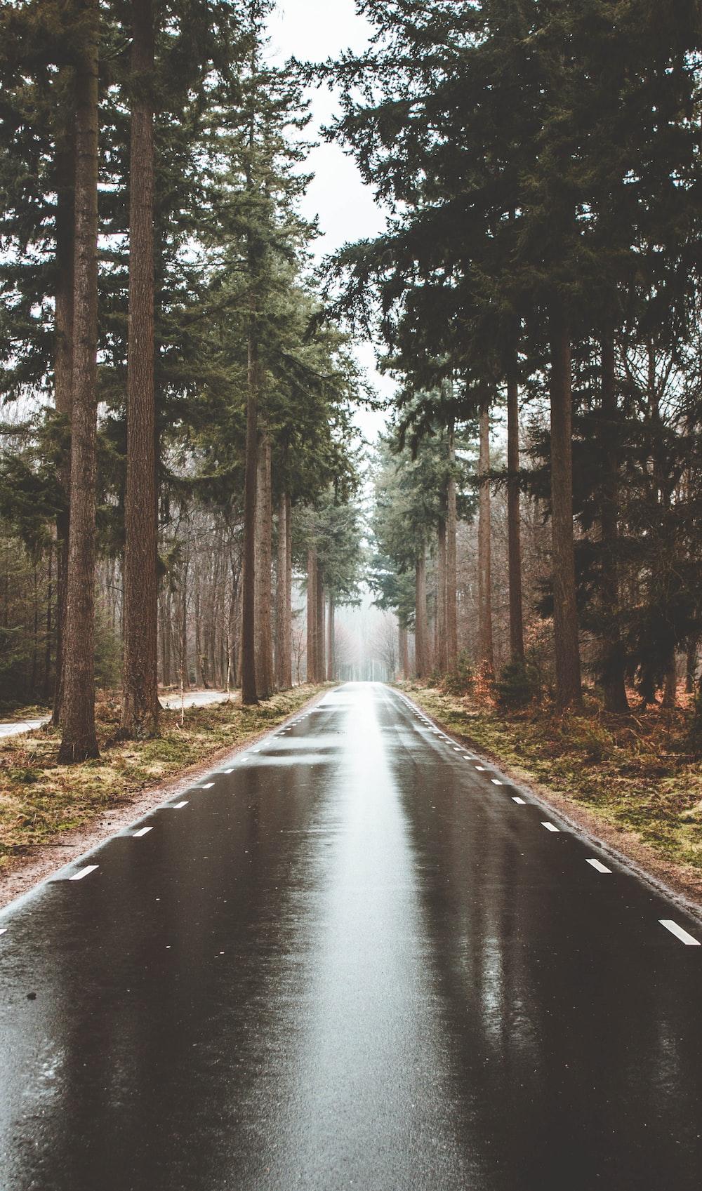 trees between road