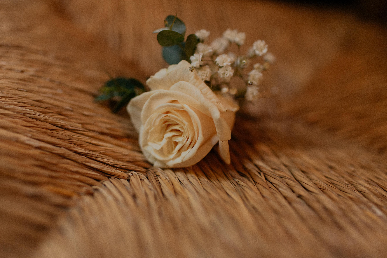 shallow focus photo of white rose