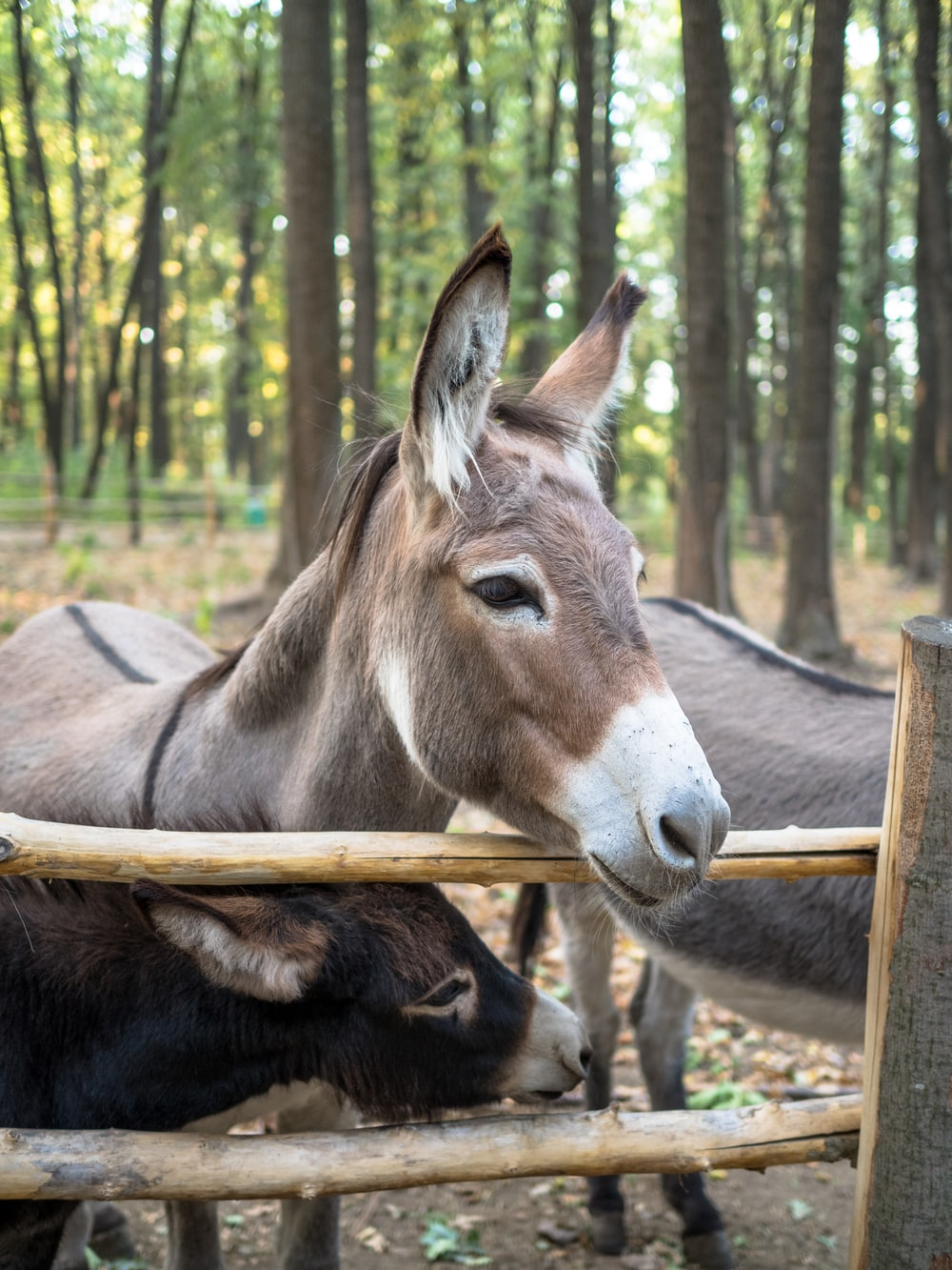 donkey near brown wooden fence during daytime