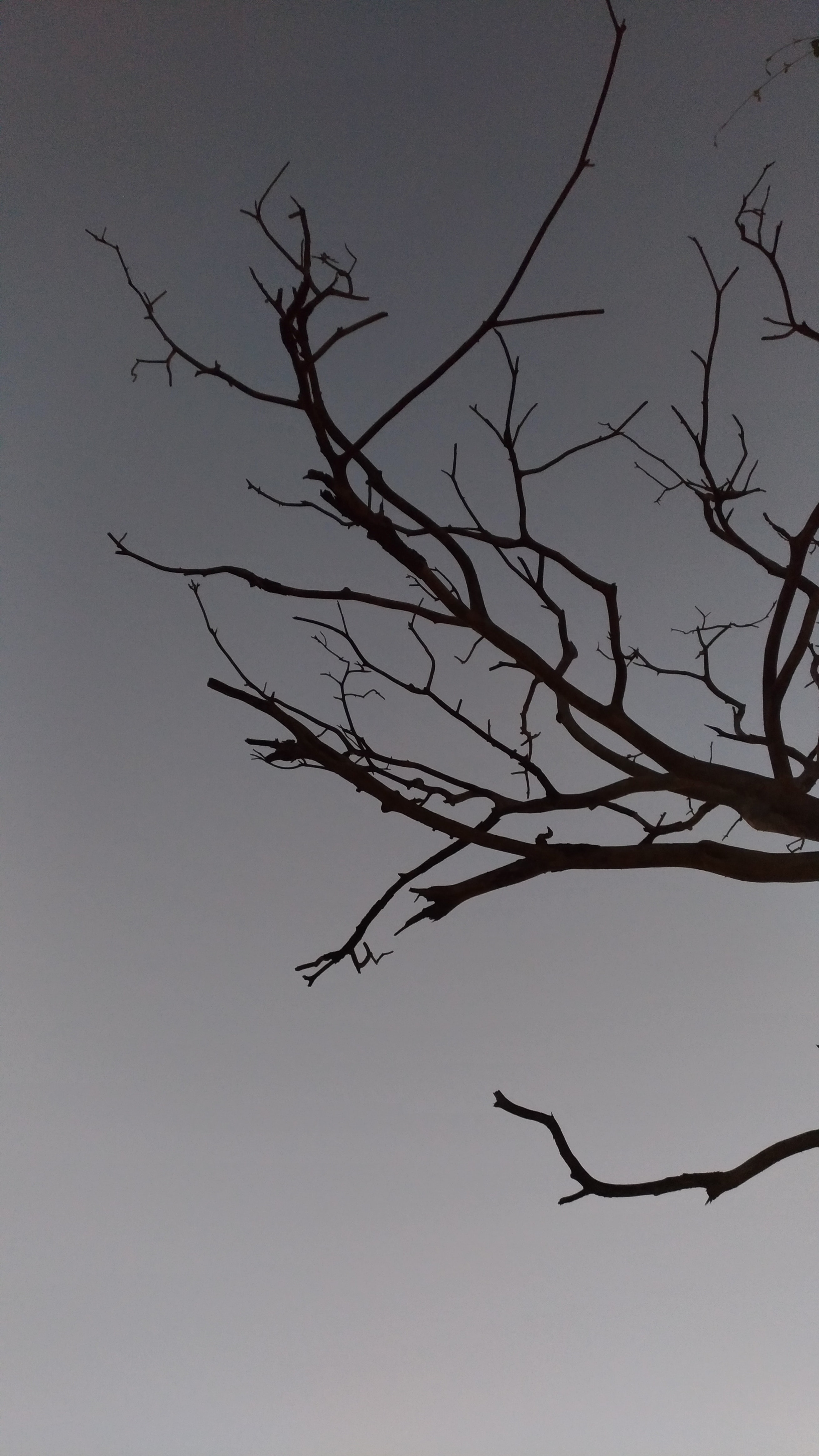 tree branch under gray sky