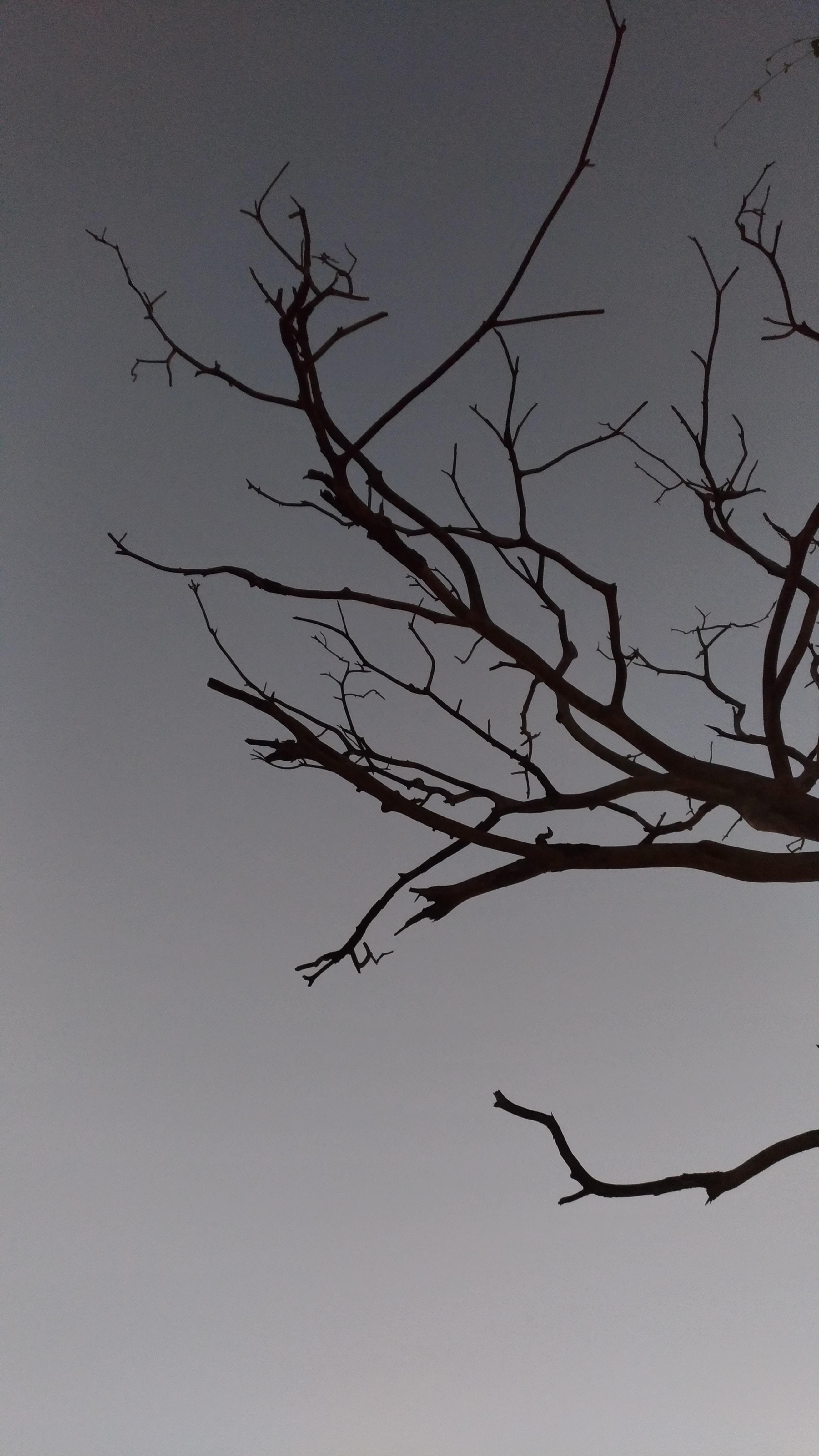 tree branch under gray sky