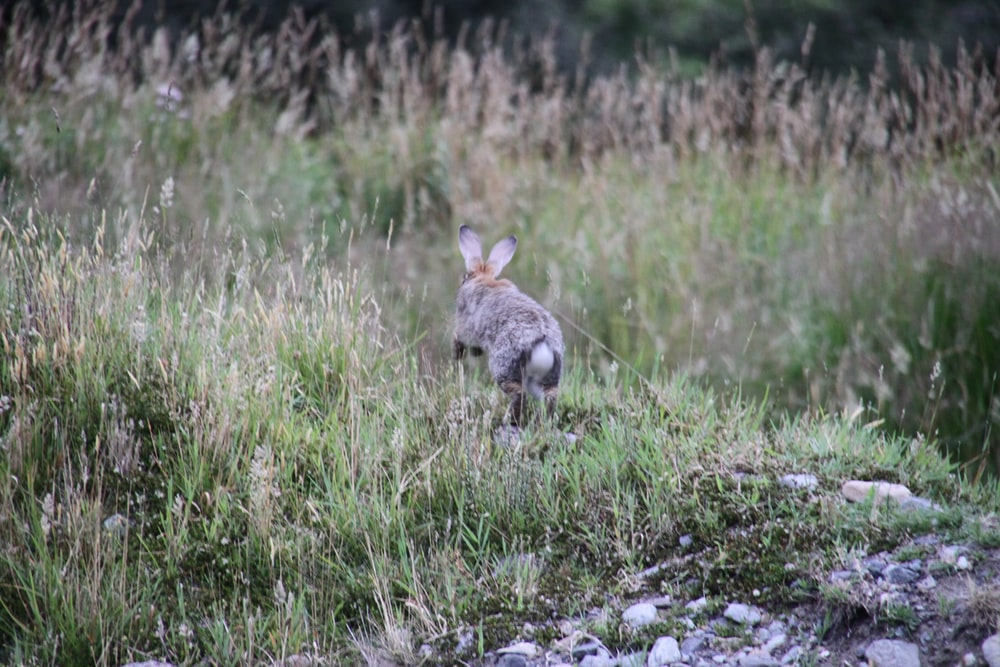 gray animal running on grass field during daytime