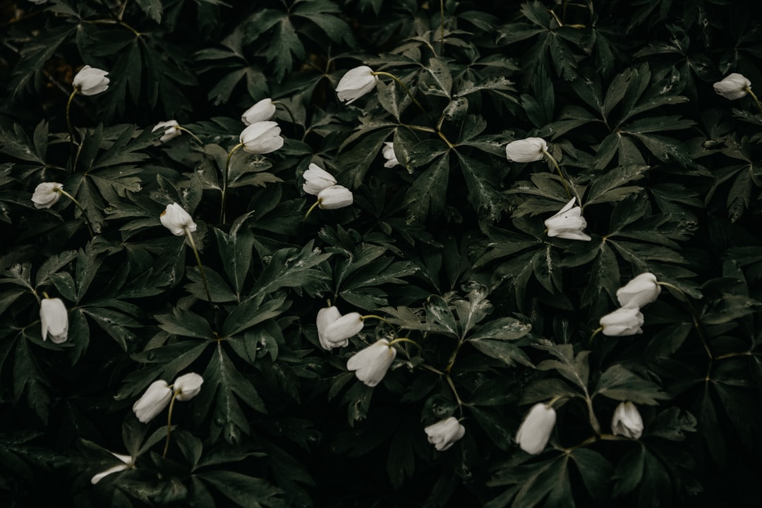 3853. Virágok