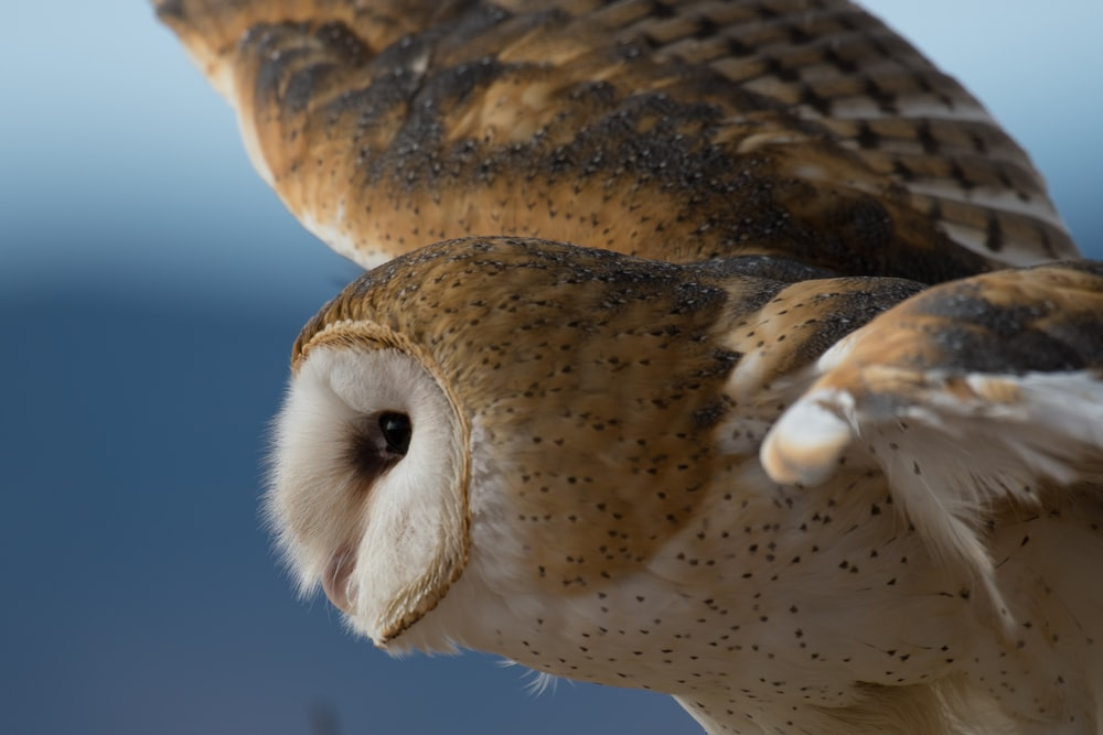 white and brown owl flying selective focus photography