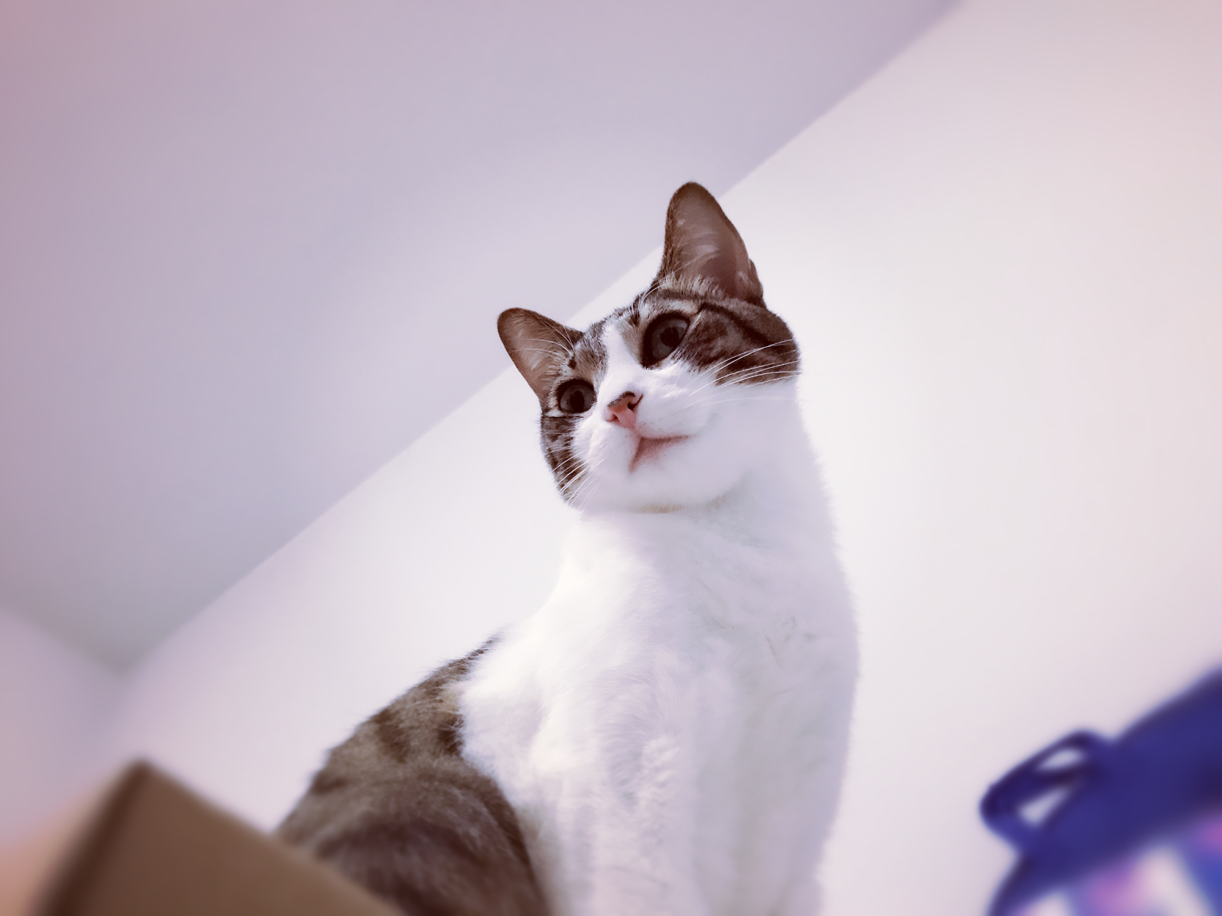 brown tabby cat on brown box