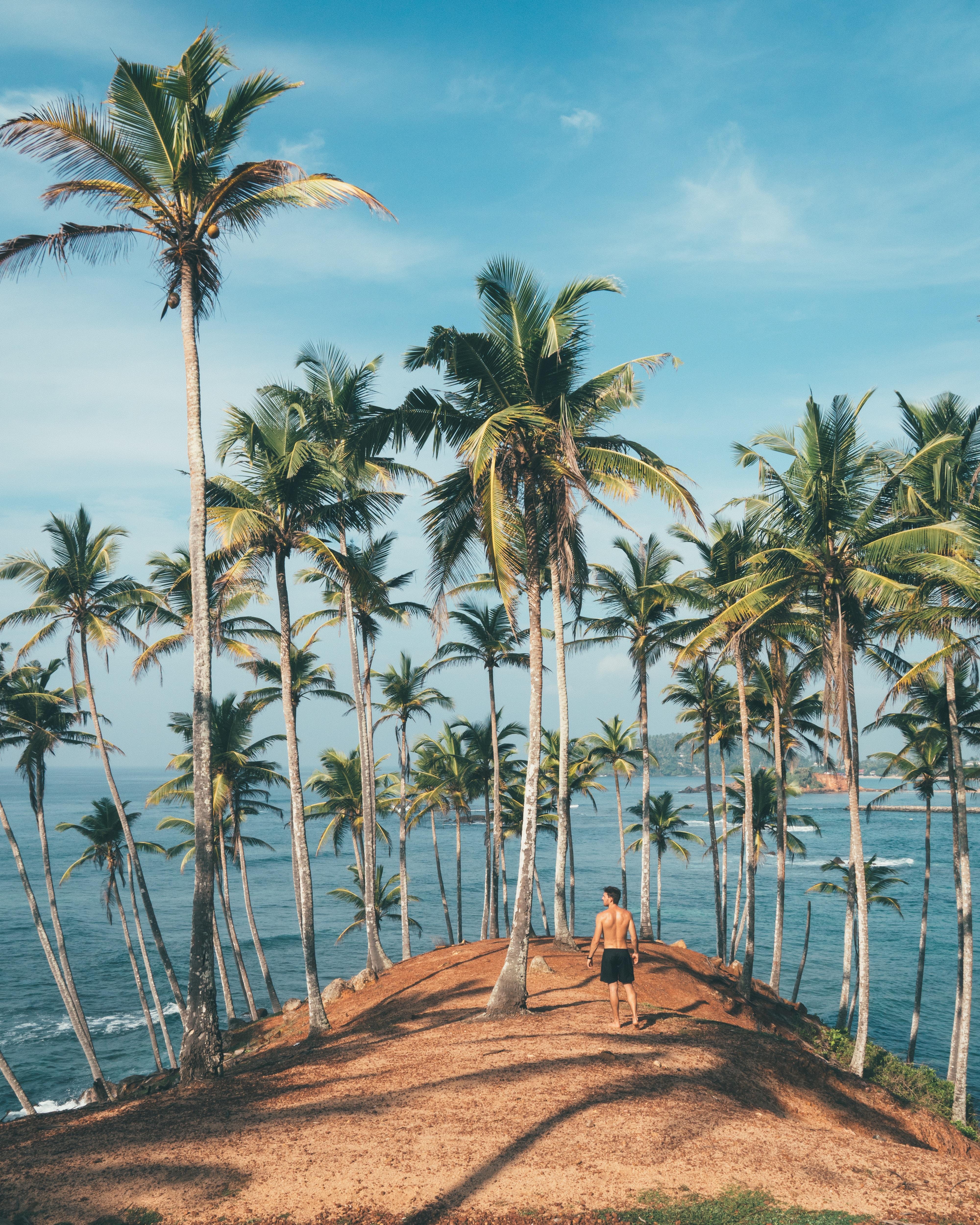 man wearing black shorts beside palm tree