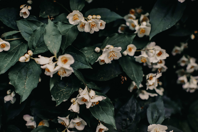 Jasmine poetry stories