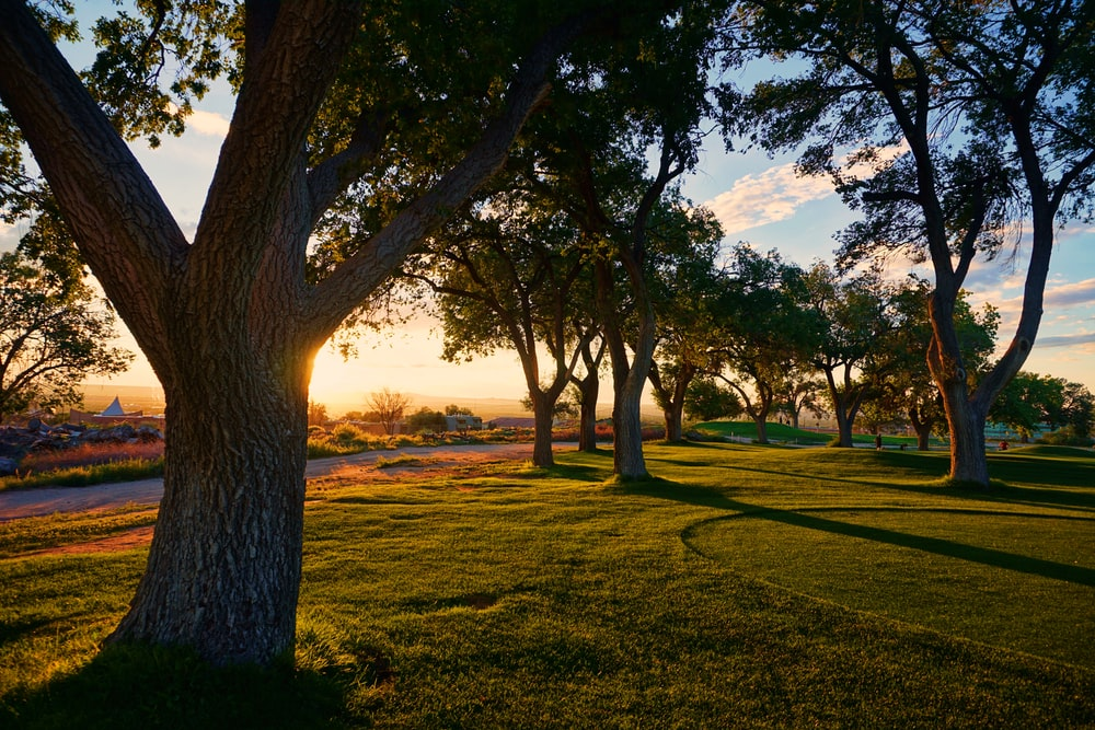 photography of trees and green grass at daytime