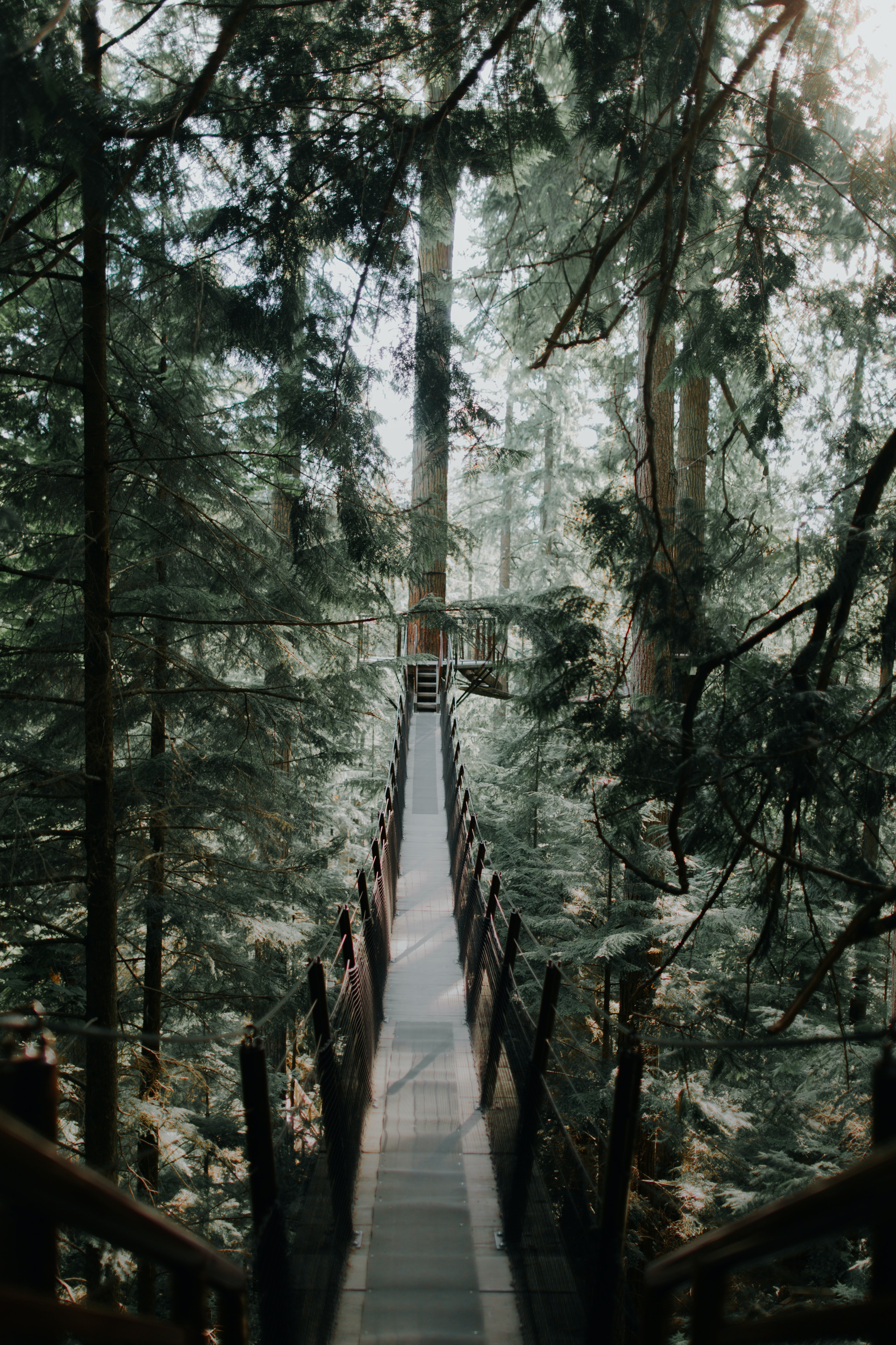 photo of brown wooden tree ladder in forest