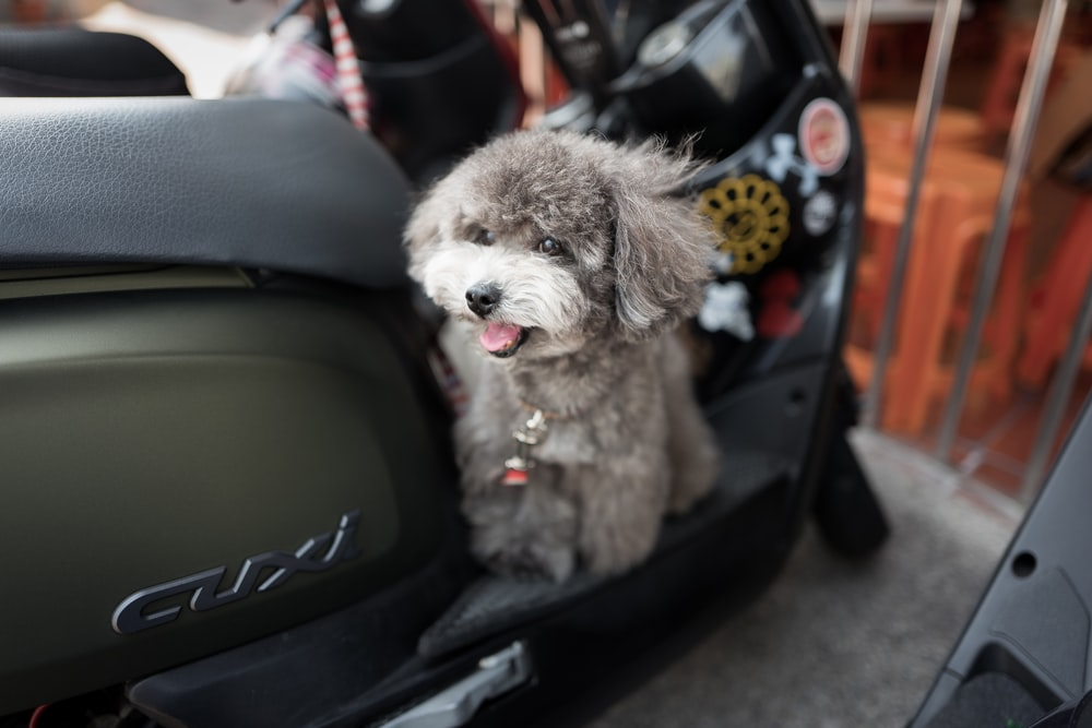 puppy sitting on motorcycle