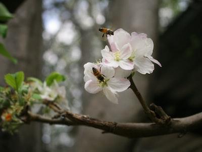 Il Covid delle api