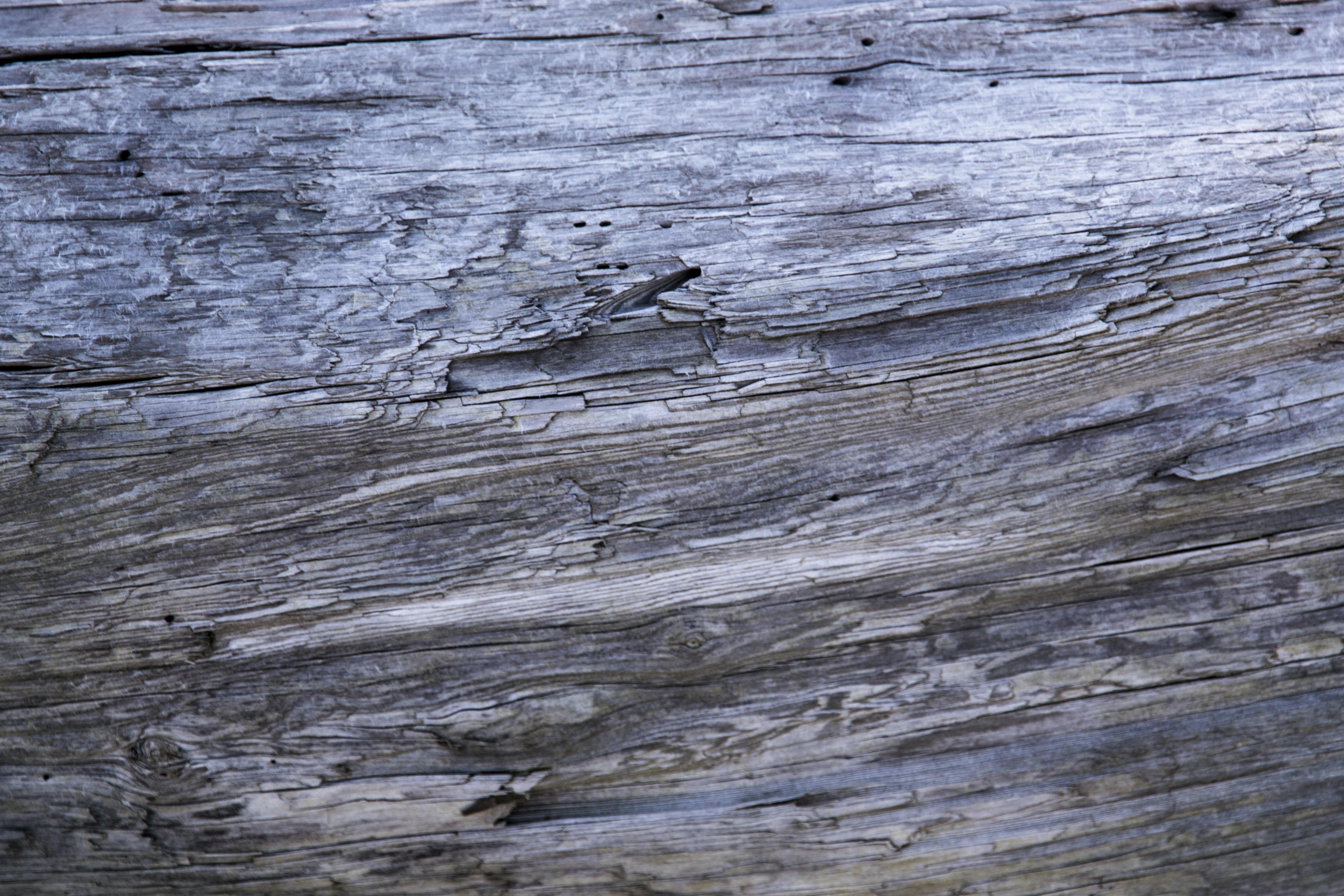 closeup photo of gray wood trunk