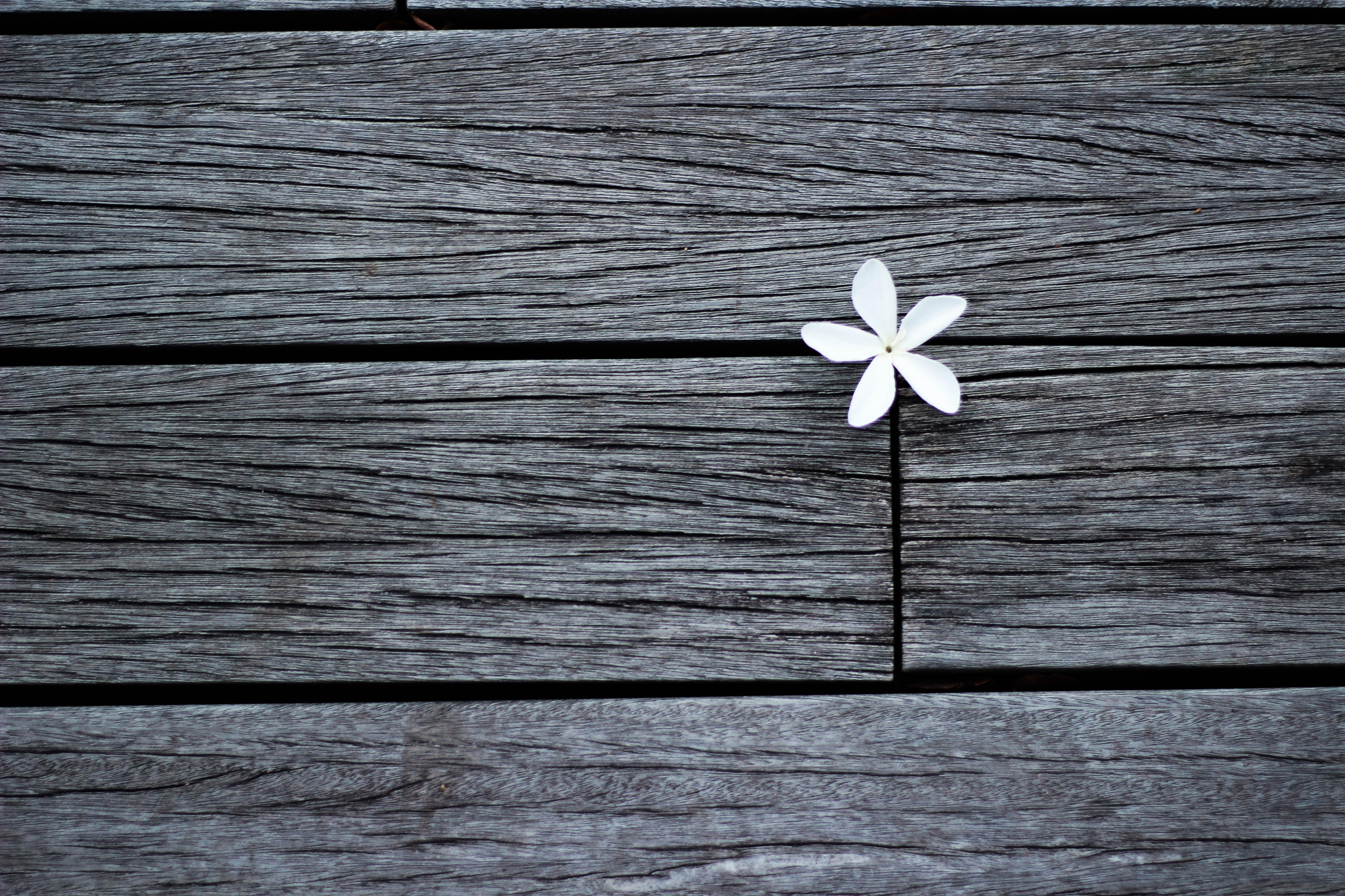 white flower on brown wooden planks