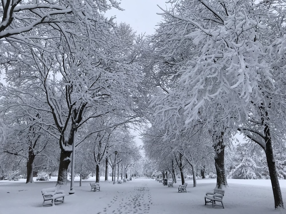 snowy outdoor benches near trees
