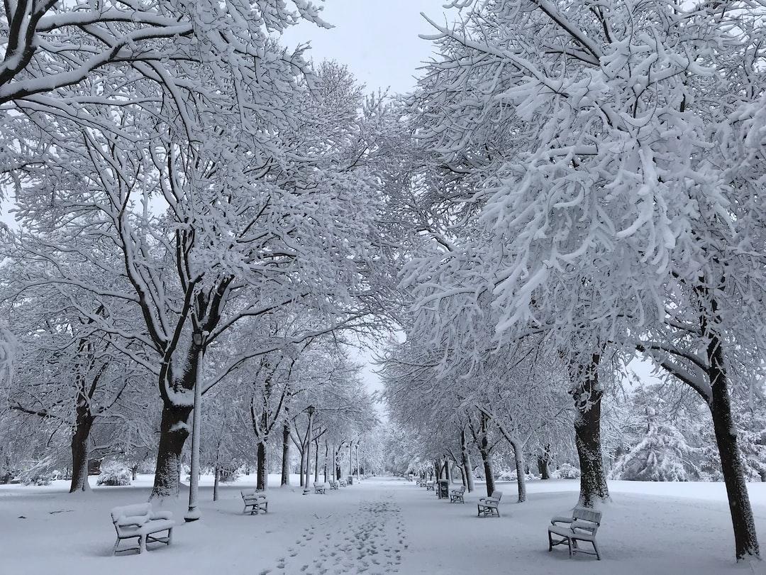 Beautiful morning in Washington Park