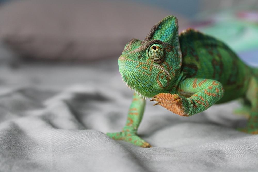 green chameleon lifting left leg