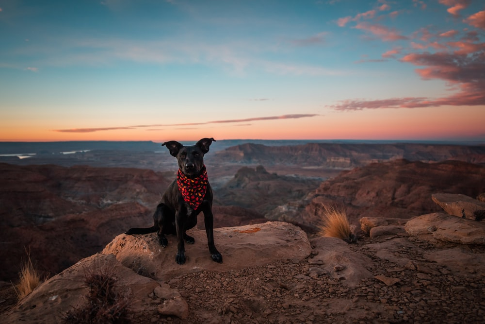 short-coated black dog sitting on rock