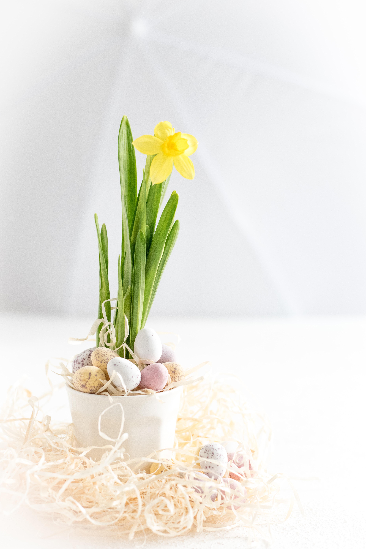 Easter Egg Hunt Pictures Download Free Images On Unsplash