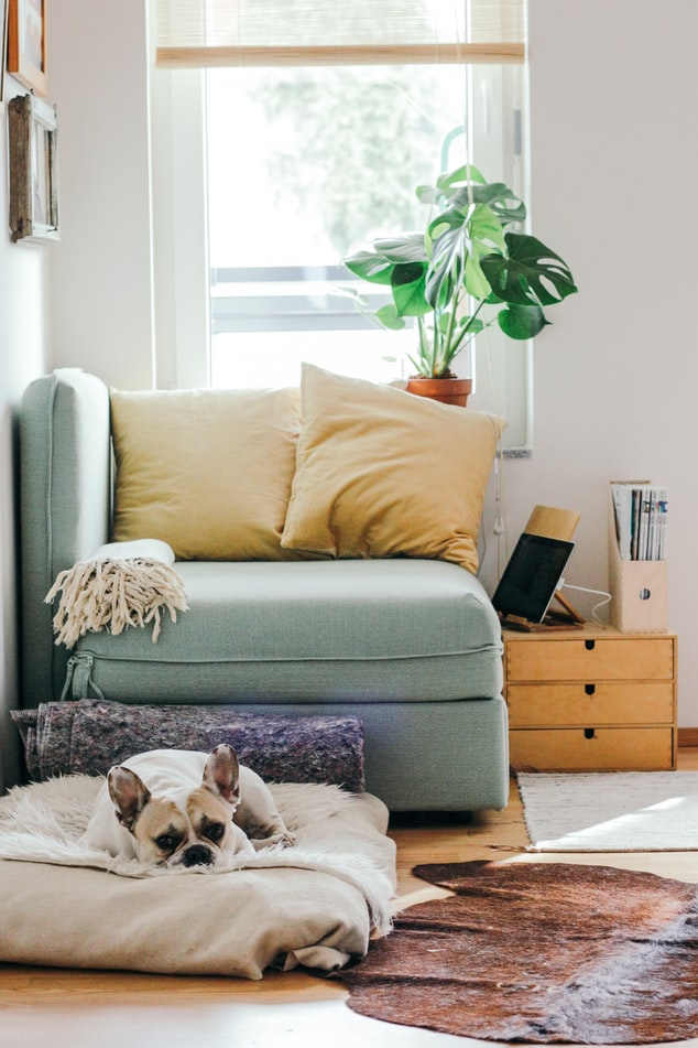 Corner reading nook with puppy