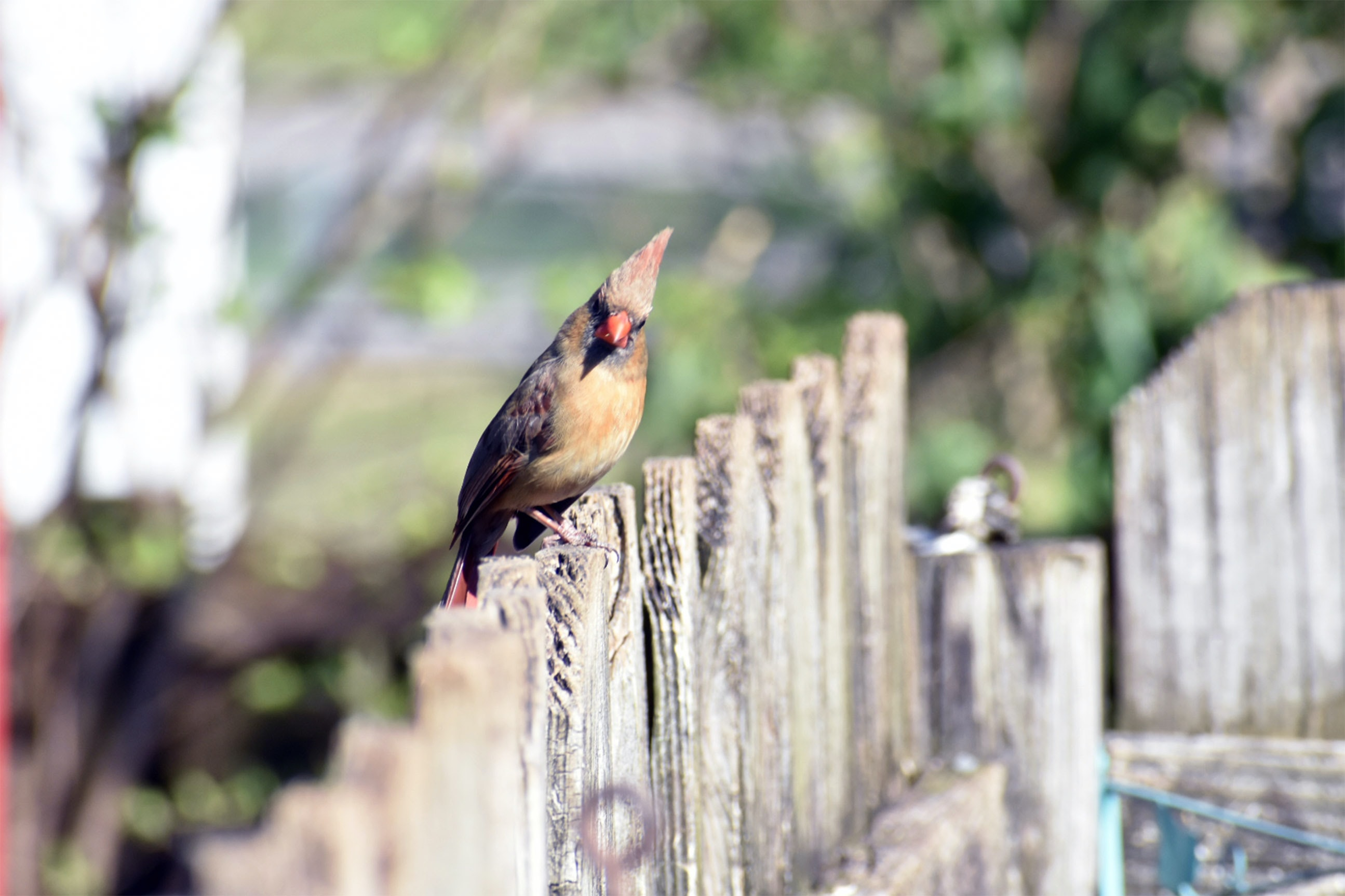 shallow focus photography of brown bird