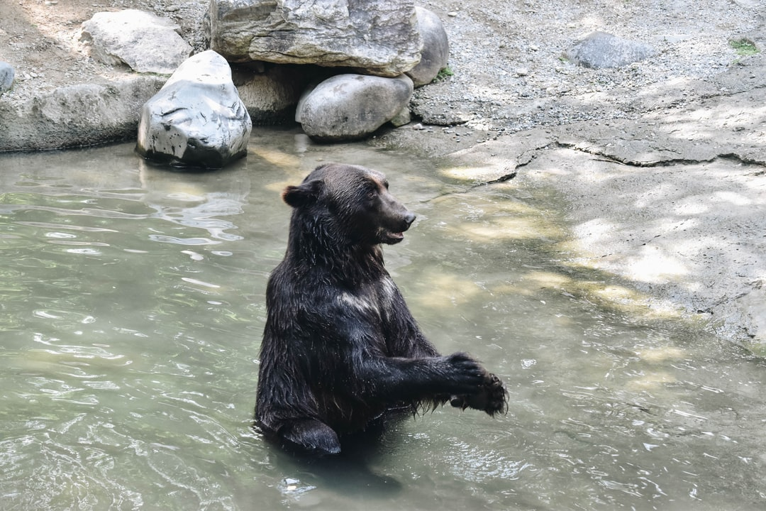 Bear Claps His Hands