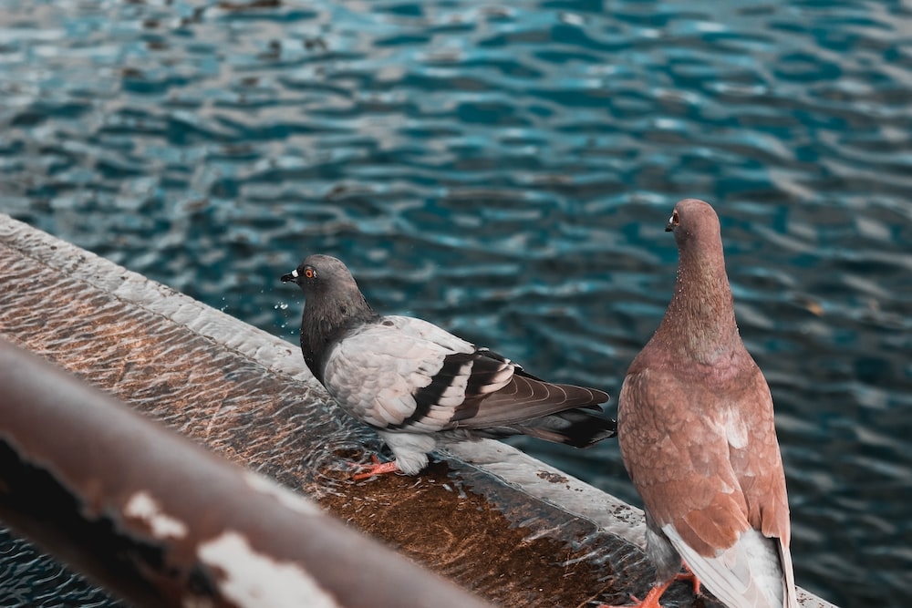 two pigeons at the dock during day