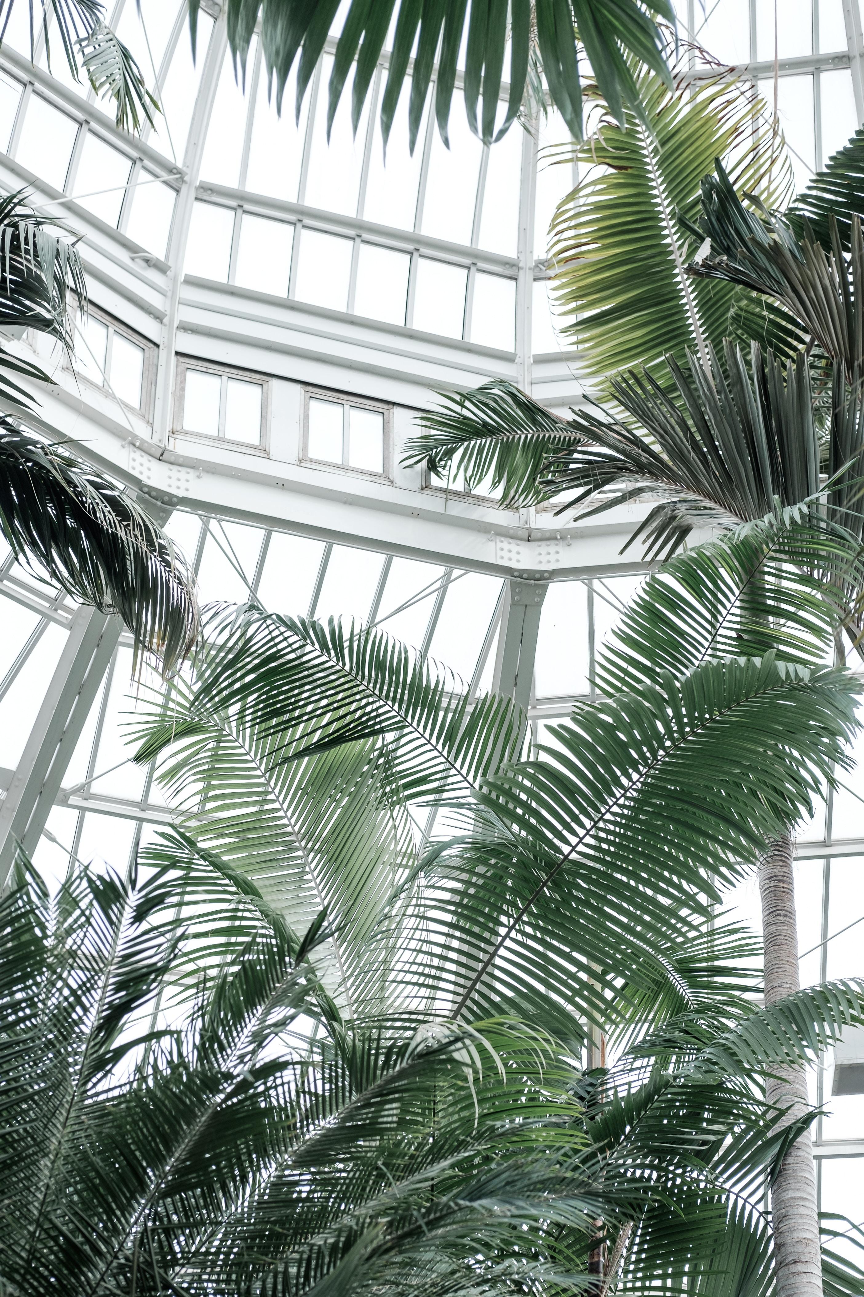 green palm tree inside building