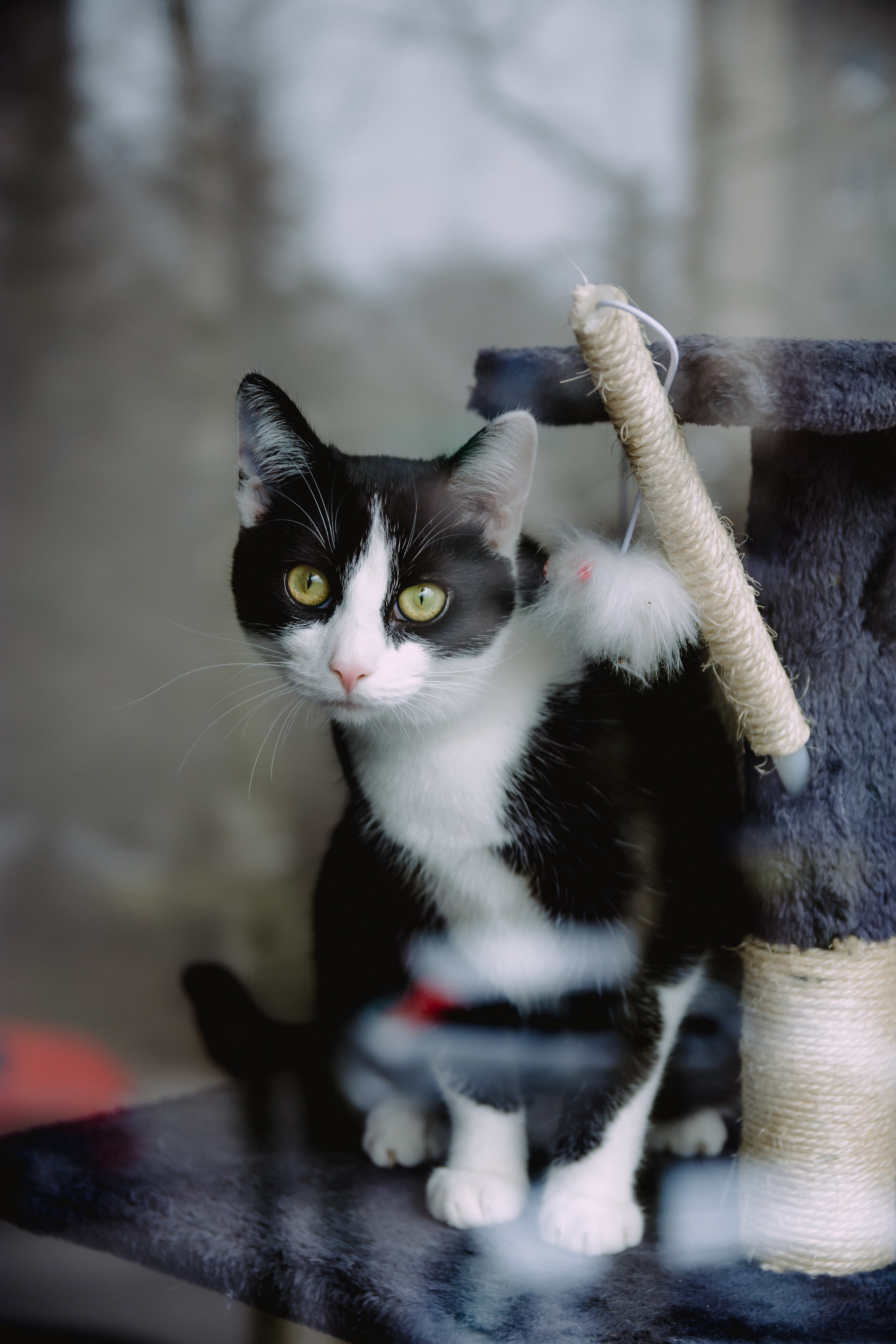 tuxedo cat on gray cat condo