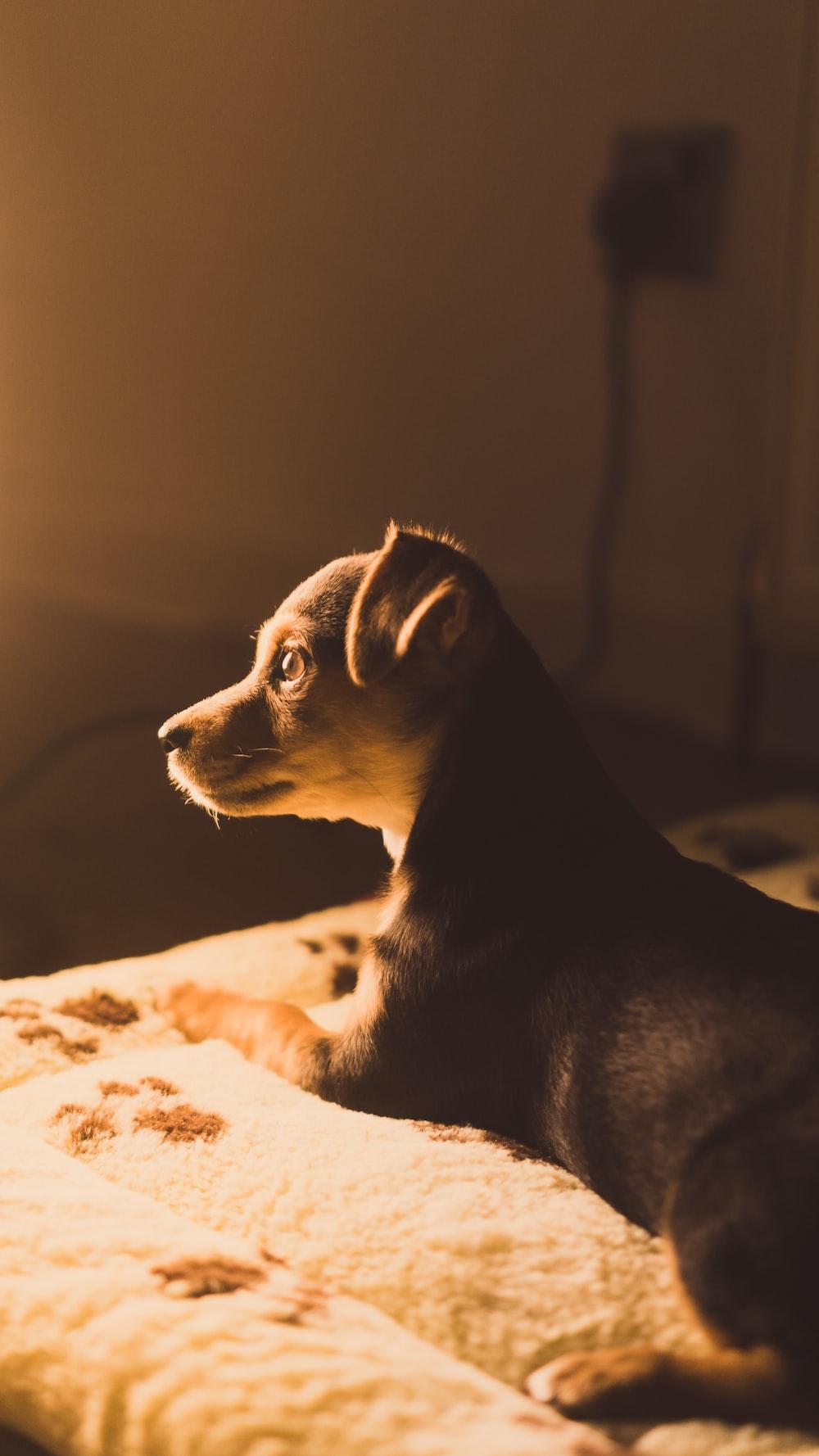 short-coated puppy sitting on white blanket