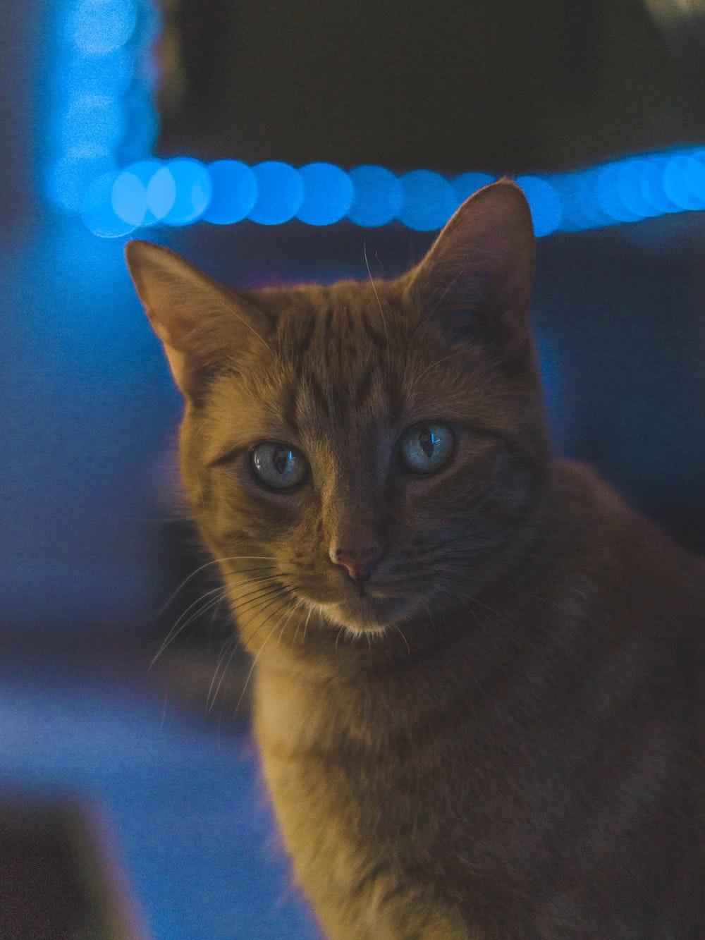 bokeh photography of orange tabby cat