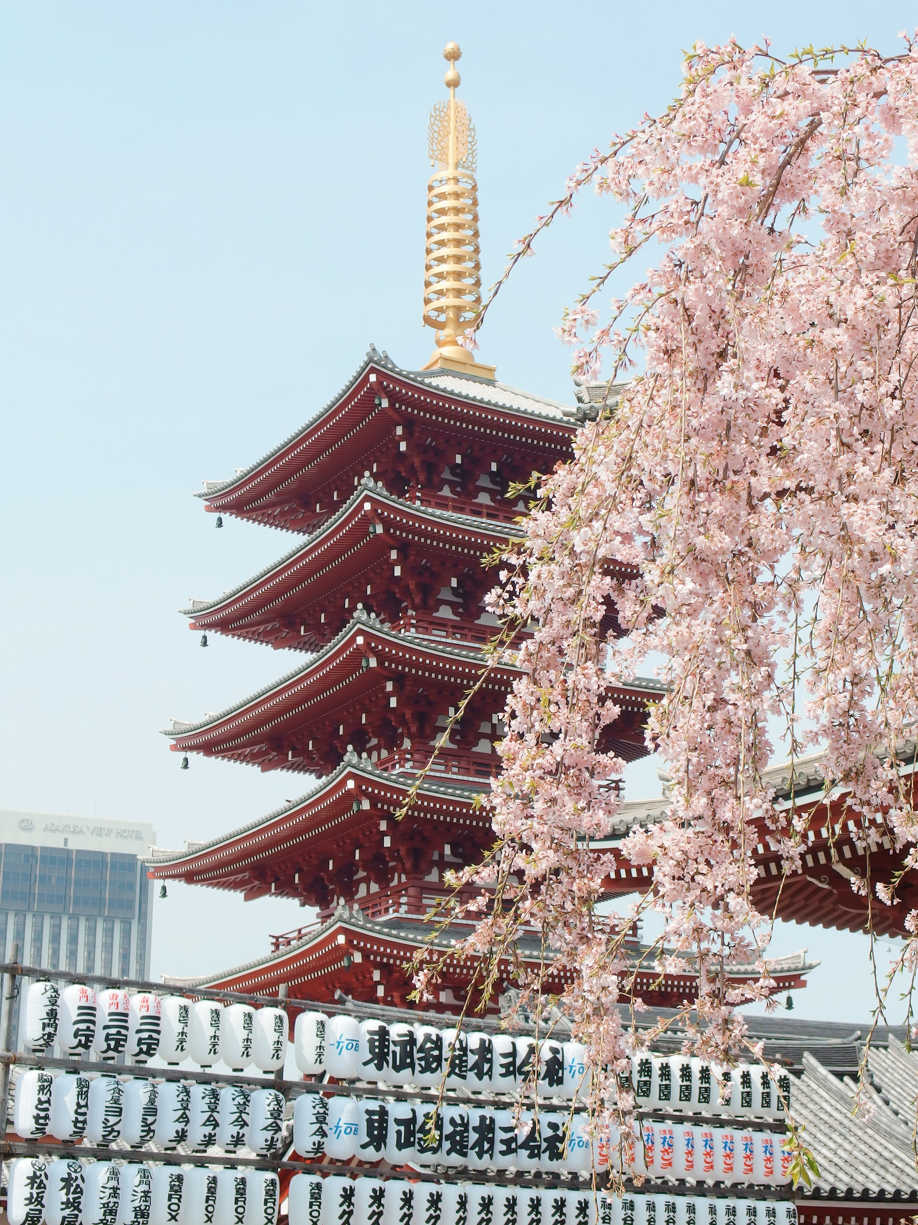 brown and gold pagoda near cherry blossom