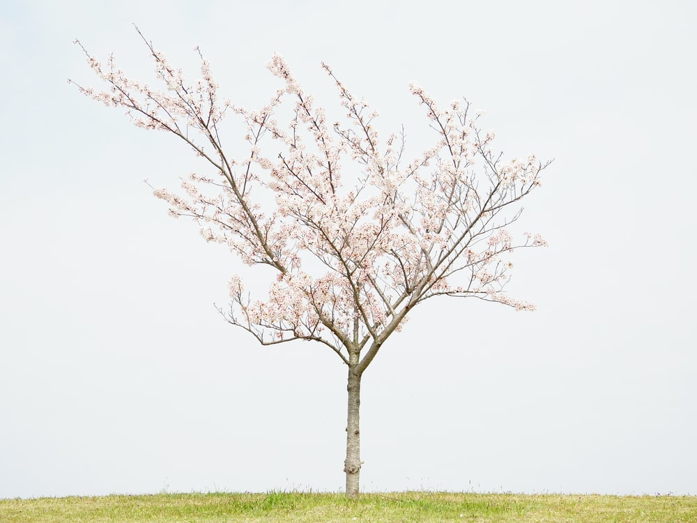 pink tree on green grass