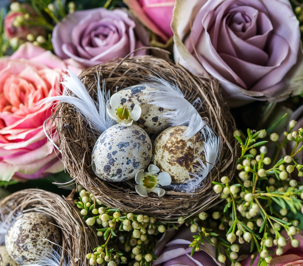 quail eggs on brown nest with flowers