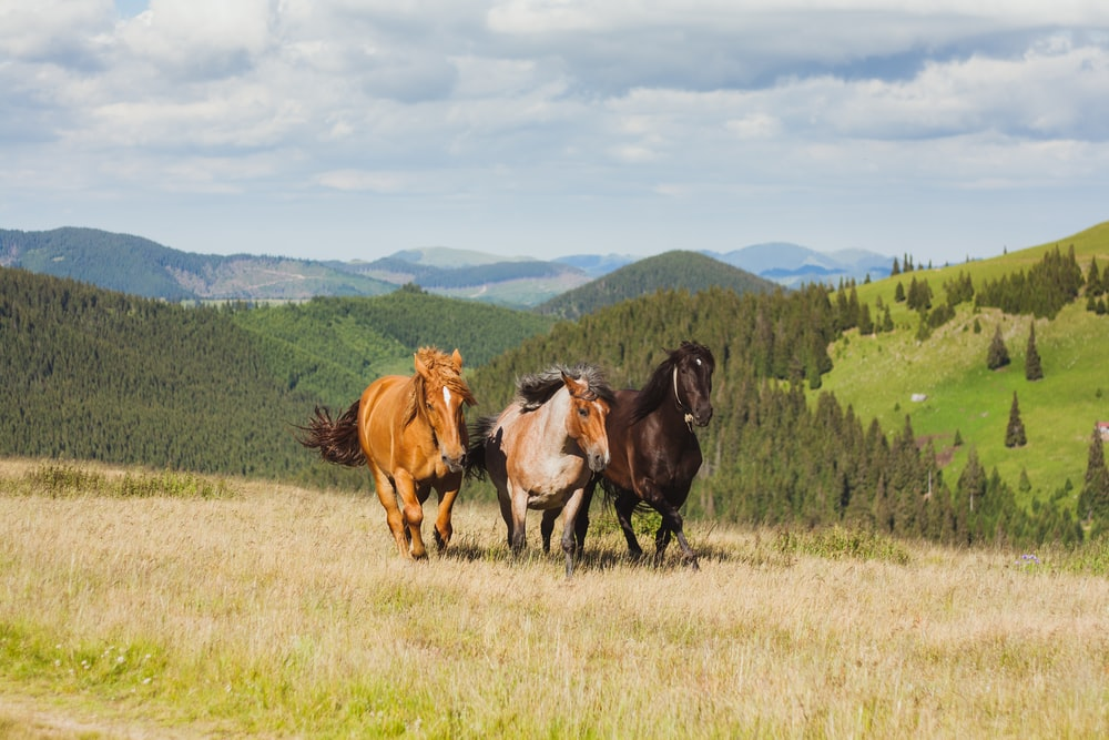 three brown and black horses running in open green field at daytime