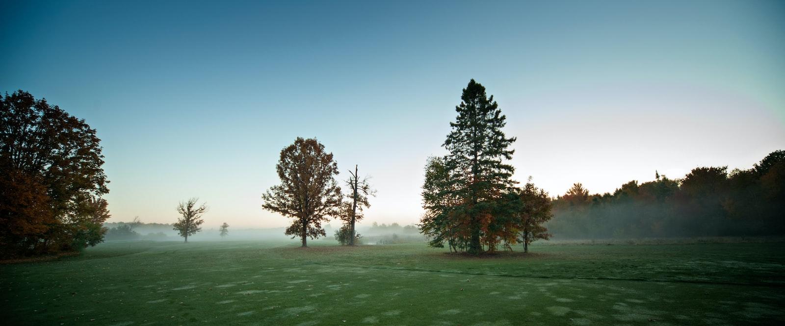 "Nikon D700 sample photo. ""Trees at the field"" photography"
