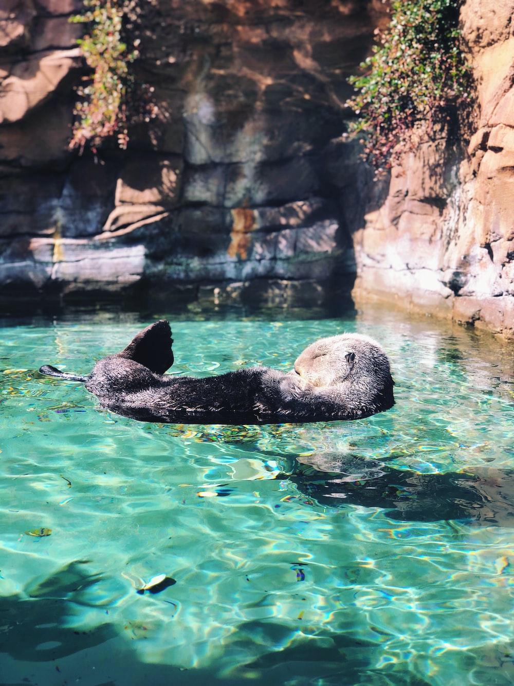 gray coated animal on body of water sleeping