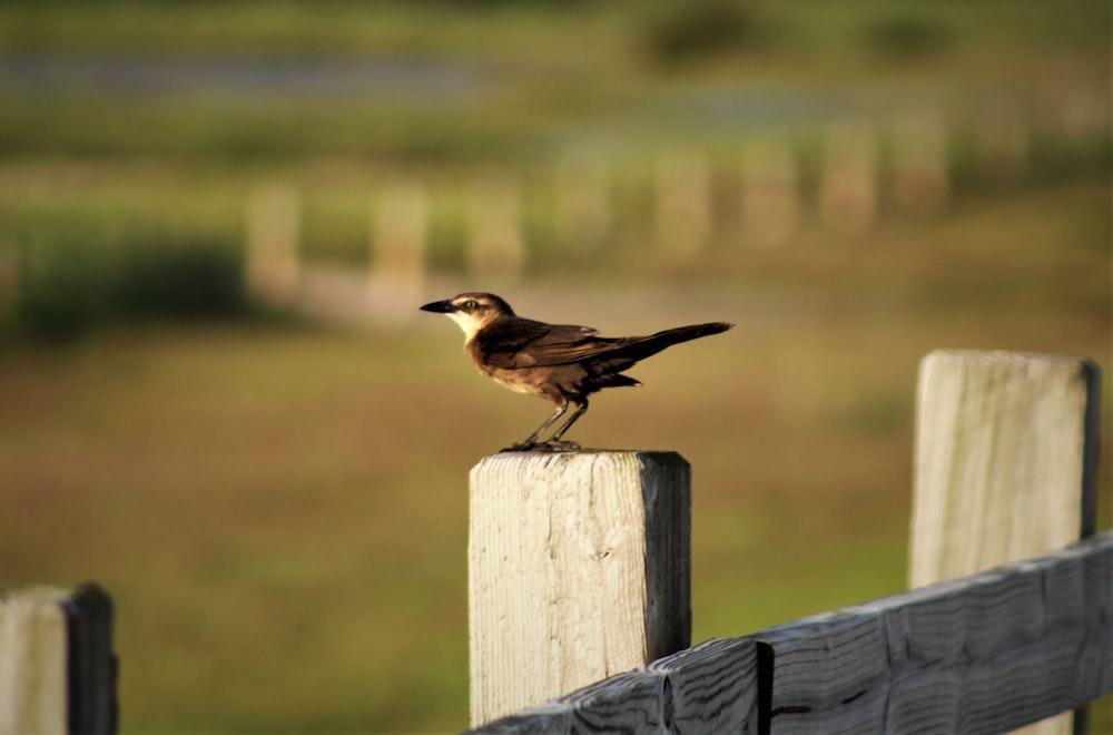brown bird on fence