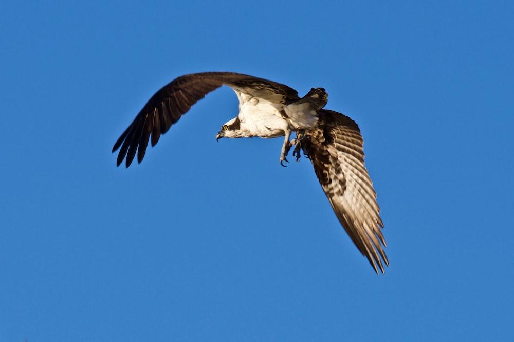 short-beak bird flying in the sky during daytime
