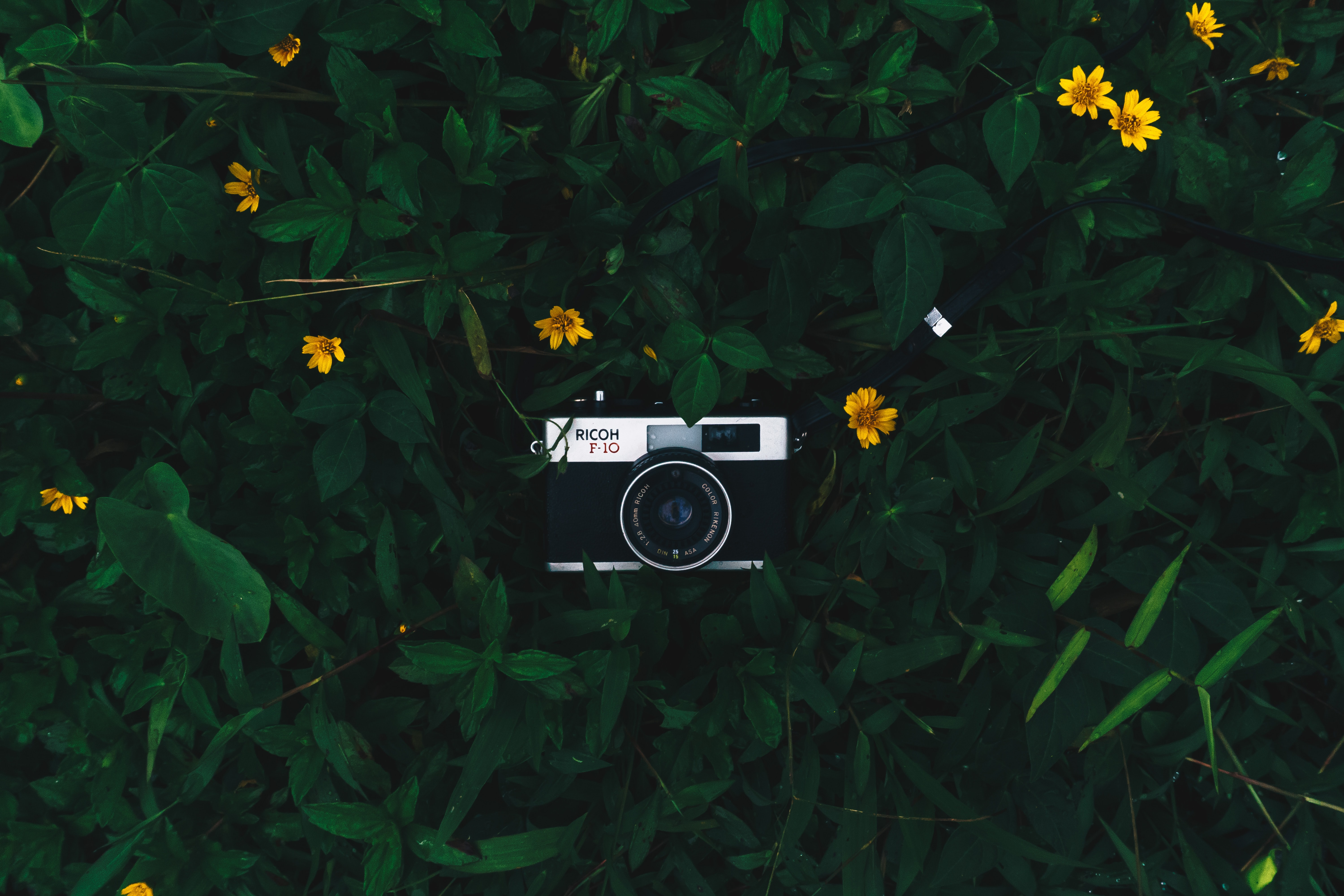 black camera on green plant