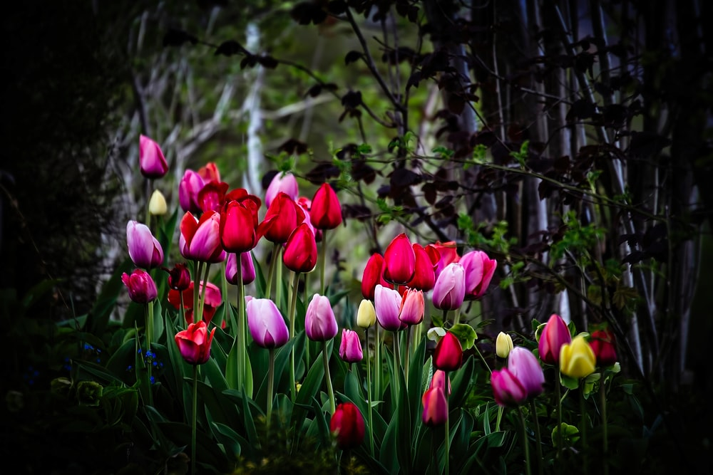 assorted color tulips blooming under trees