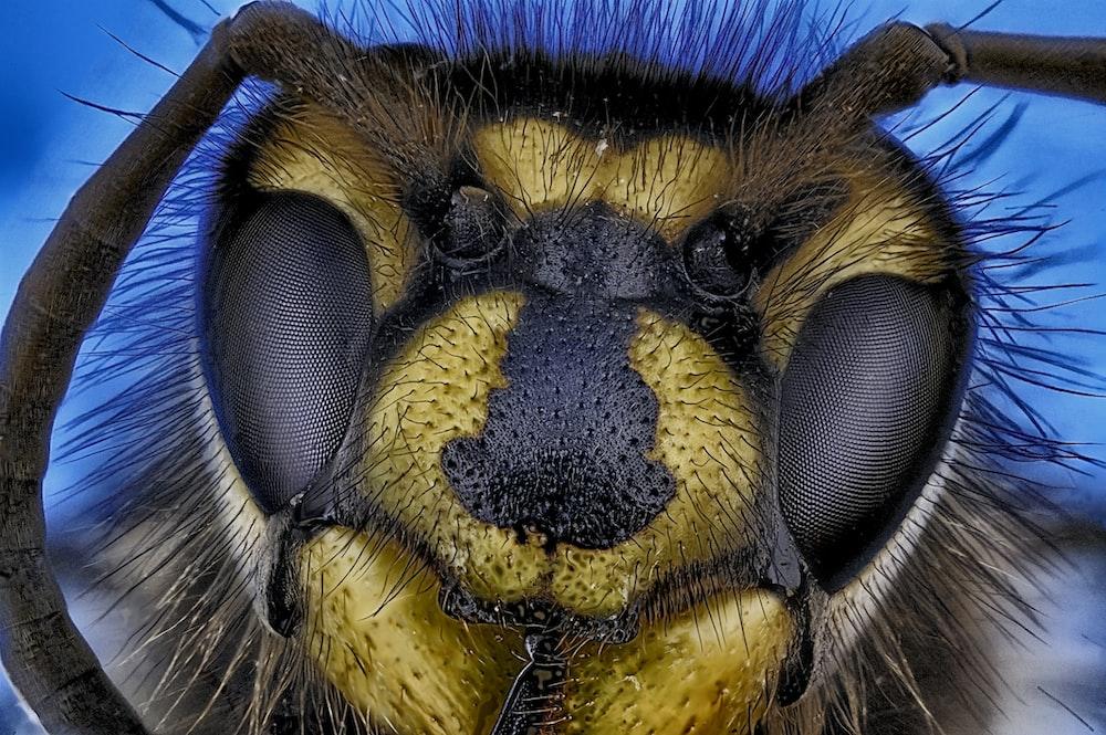 macro photography of bee