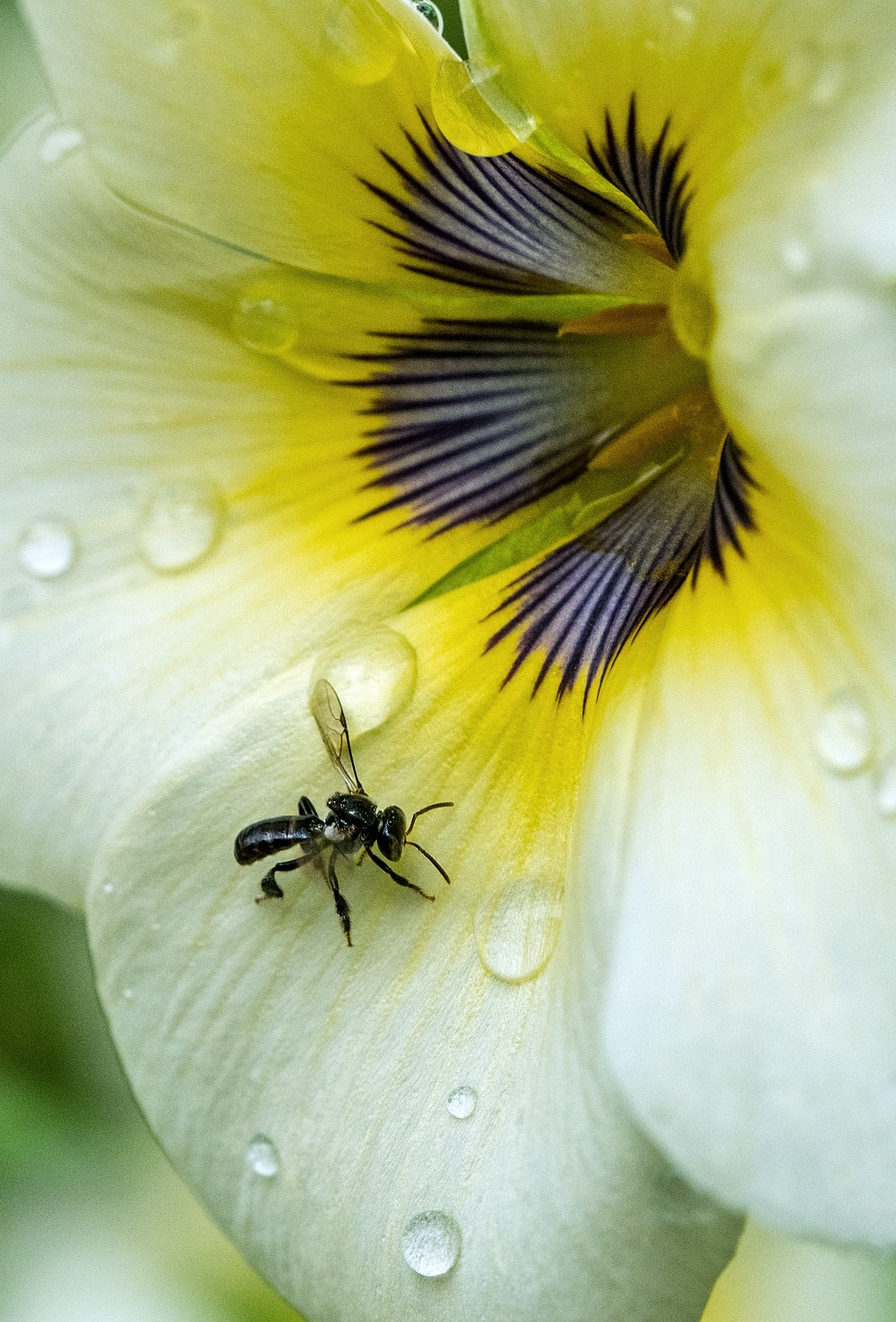 black insect on flower