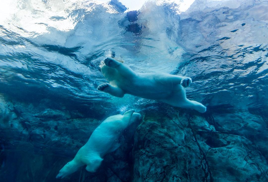 Syntetické chlupy ledních medvědů jako nový izolační materiál